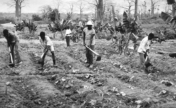 peasantfarm.jpg