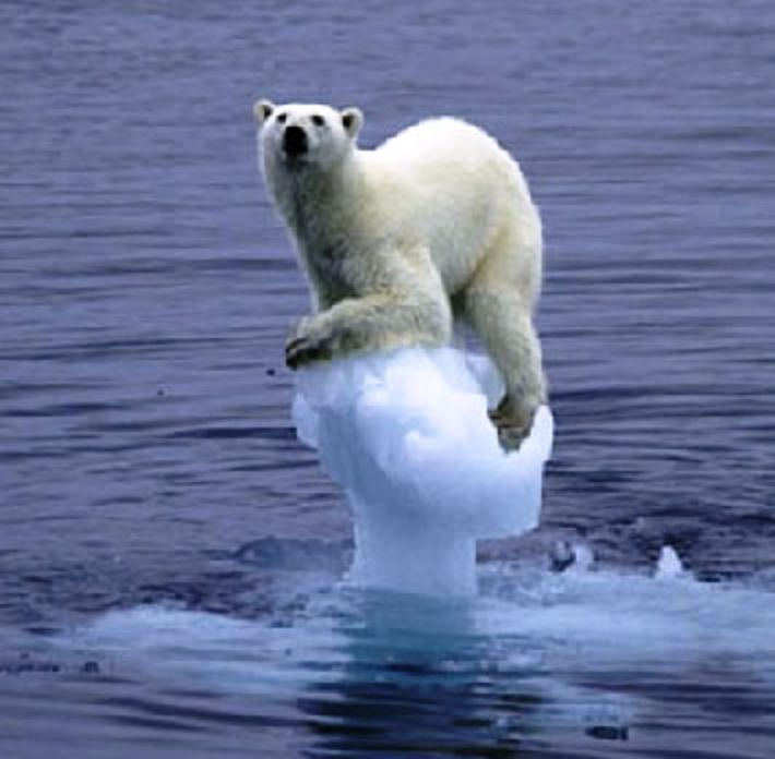 polarbearnotindanger.jpg