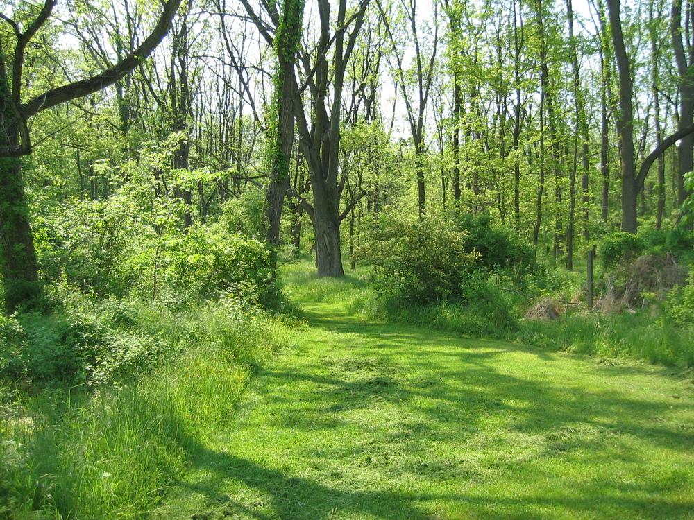 lorimer woods.JPG