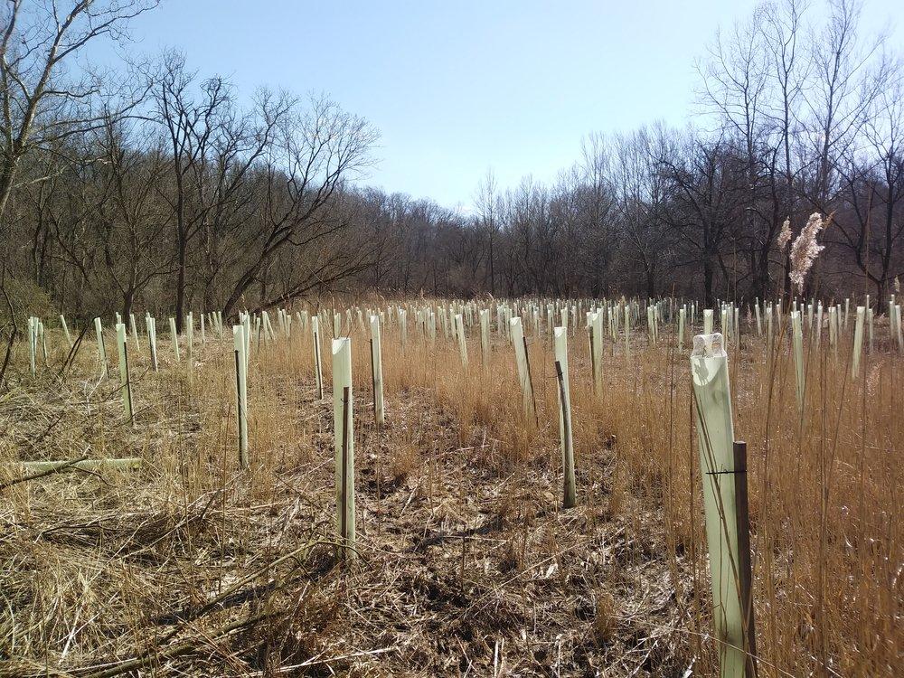 Planting 4.3.19.jpg