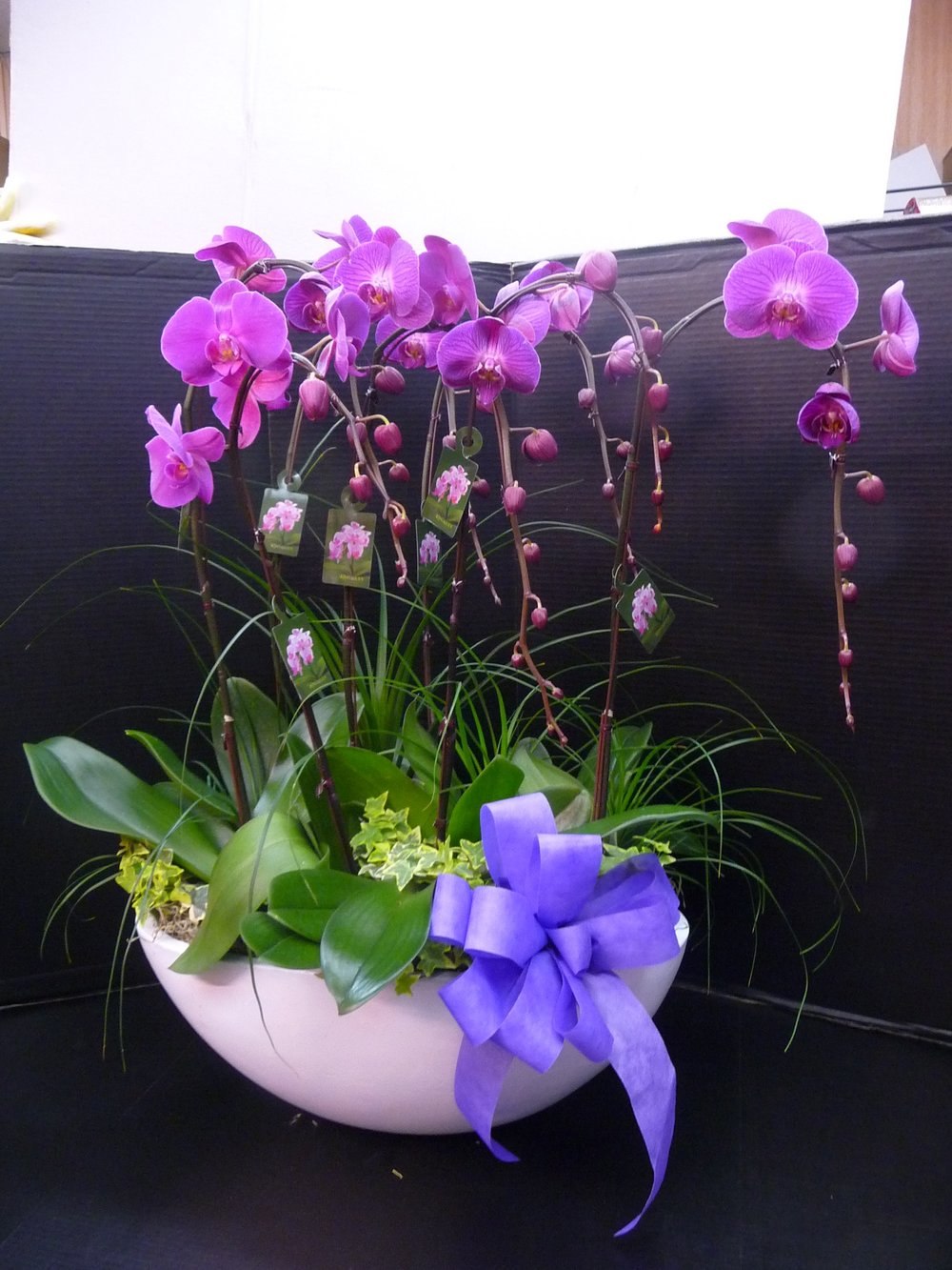 Elegant Orchid Planter