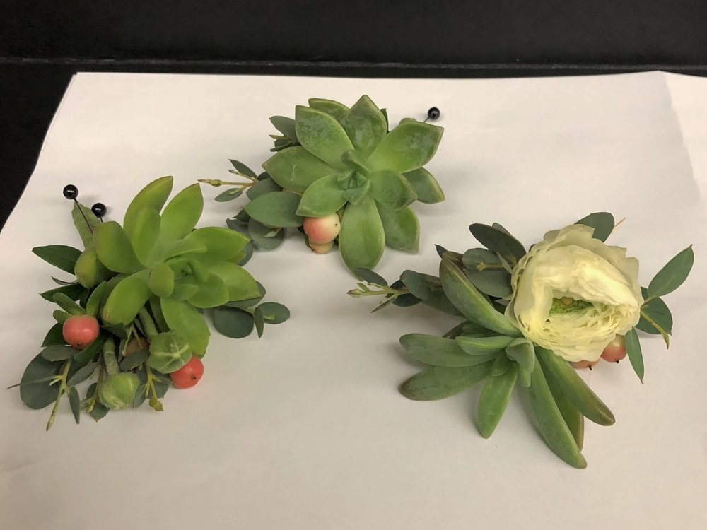 The Succulent Collection