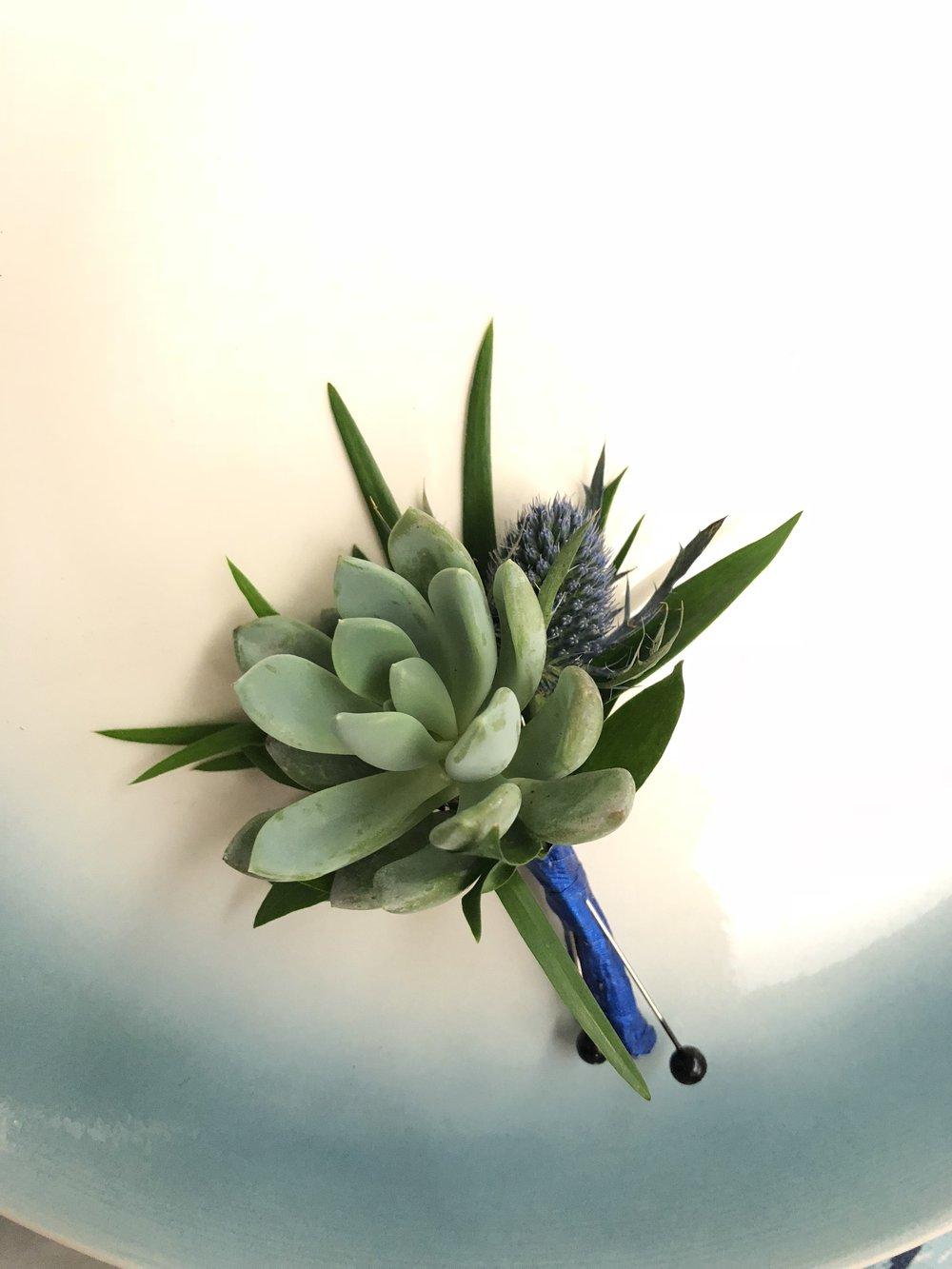 Succulent & Irish Thistle