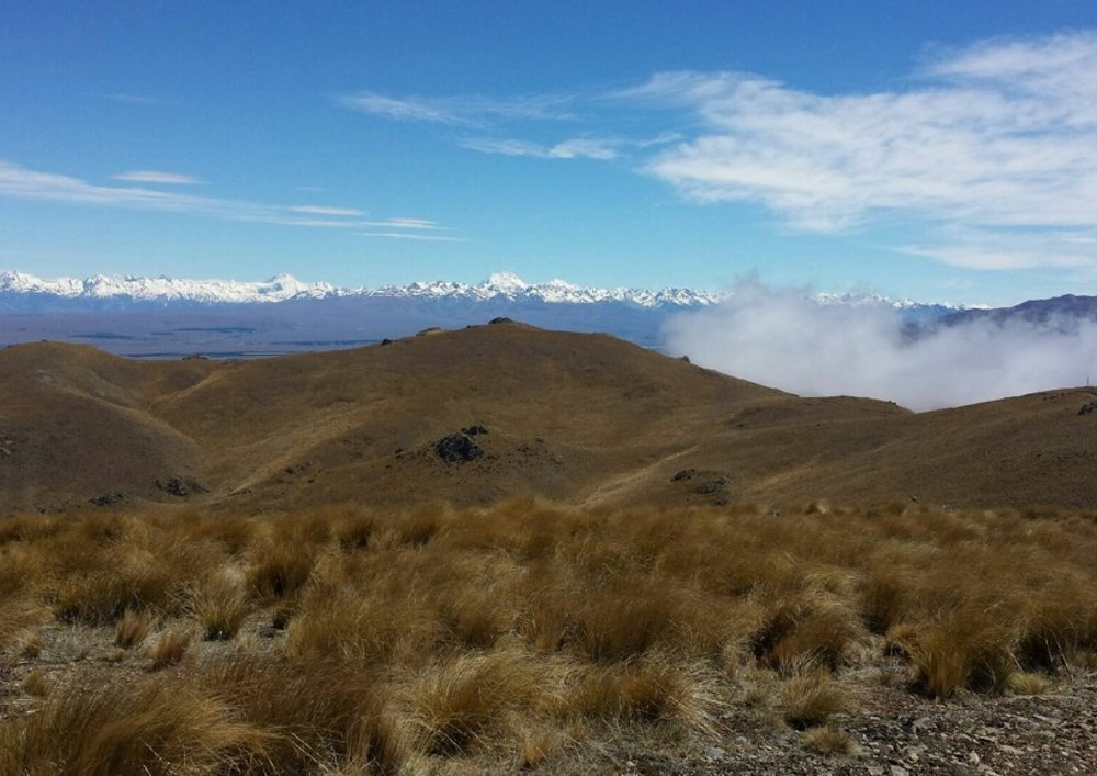 """Above the clouds looking at Mt Cook - lots of rabbits today""   photo by Max the Hunter"