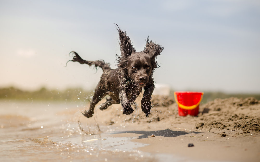 DOG RUNNING ON BEACH.jpeg