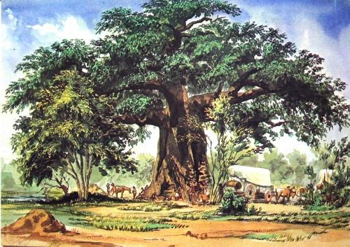 Thomas_Baines_Baobab.jpg