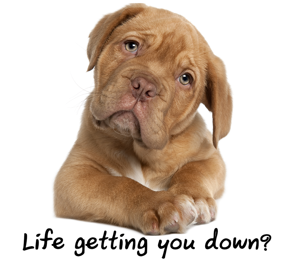 Dog-Life-Getting-You-Down.png