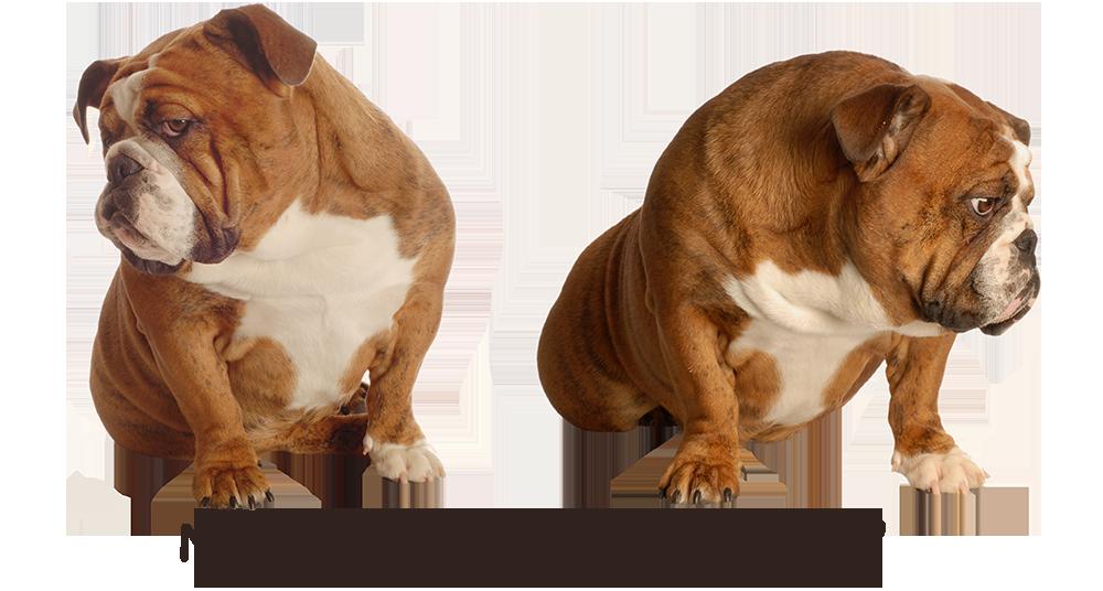 Bulldogs---Eye-to-Eye.png