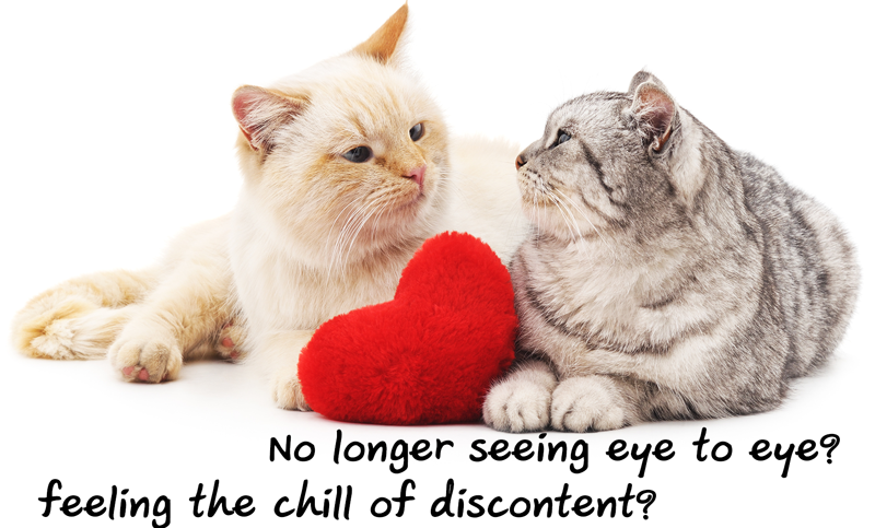 Cats-eye-to-eye.png