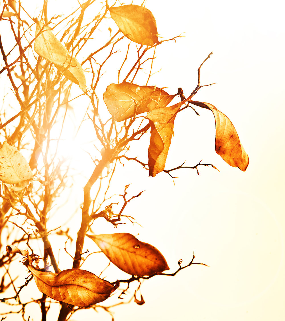 bigstock-Image-of-golden-dry-autumn-lea-102342392.jpg