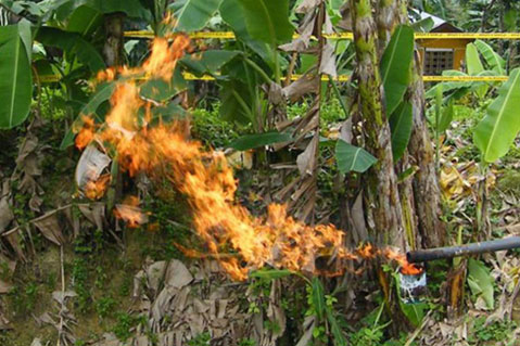 Malolos-1: Gas flare, June, 2011