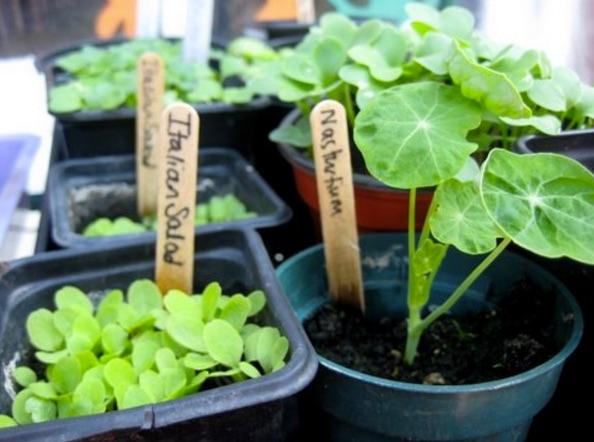 1 plant stall jpeg.jpg