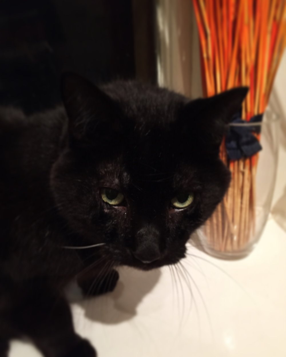 Rest in peace sweet Panther.