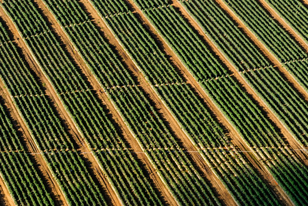 precision agriculture, ndvi