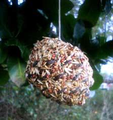 pine-cone-bird-feeder-223.jpg