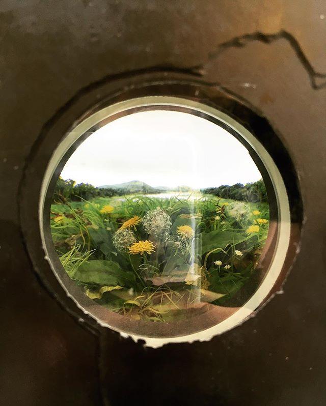 Literal peekaboo view 👁