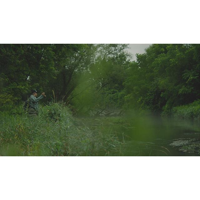 The Jungle of Cumberland Valley @neilsunday #flyfishing #centralpa #cumberlandvalley #pennsylvania #redscarletw @reddigitalcinema @orvisflyfishing @easyrig @leicacamerausa