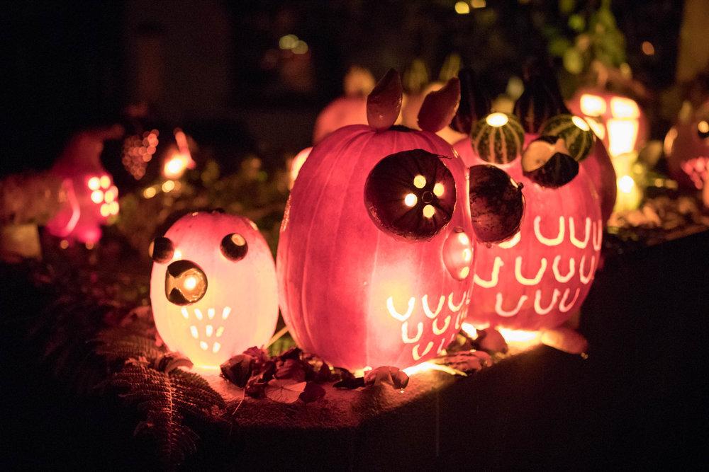 Pumpkin-013.jpg