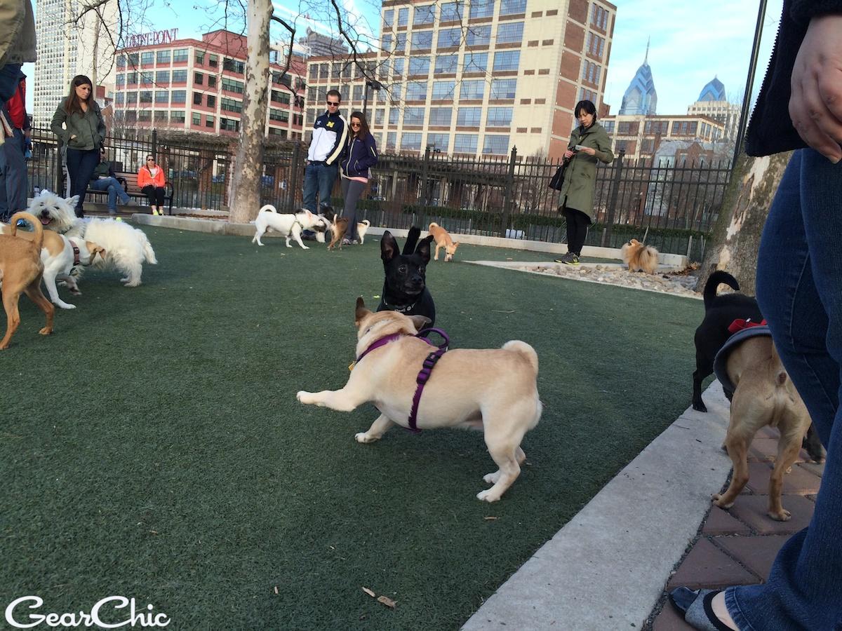 schuykill dog park
