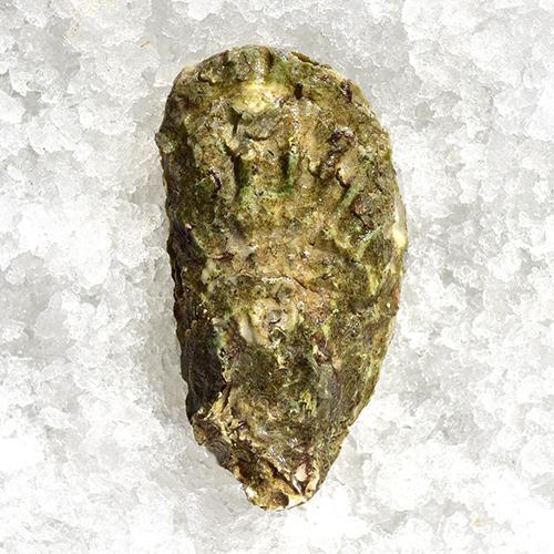 Oysters Ram Isalnd 1.jpg