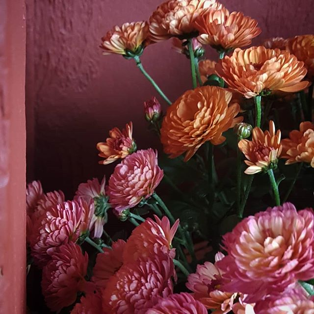 All the brilliant Autumn colors are happening. #florallove #nothingisordinary #livemoremagic #autumn #mums