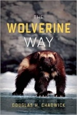 wolvway.jpg