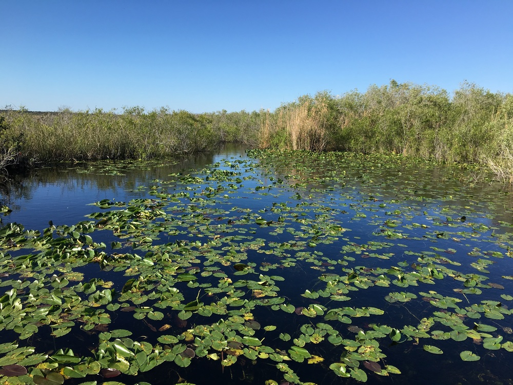 Everglades National Park, photo by Derek Wright.