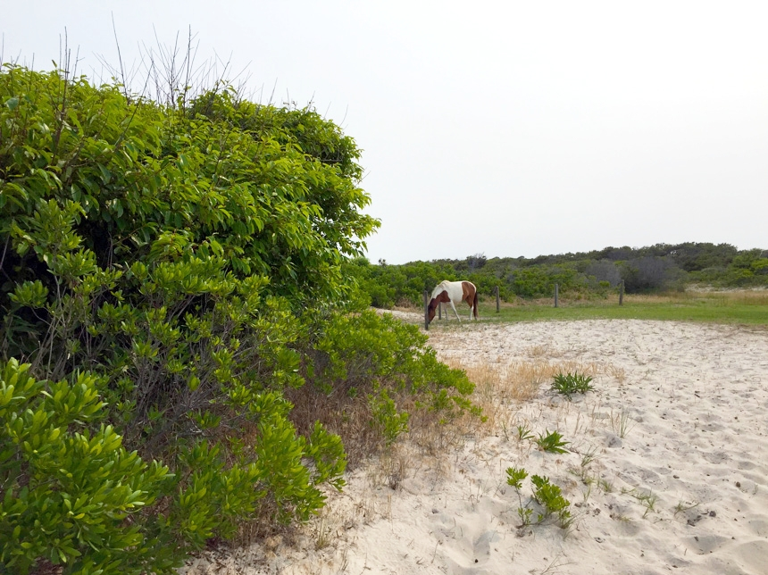 """Shelter"" was inspired by Assateague Island National Seashore."
