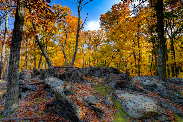 Catoctin Mountain Park,  photo by  tom santanello / BY