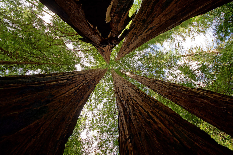 Big Basin Redwoods State Park,  photo  by Allie_Caulfield / CC 2.0