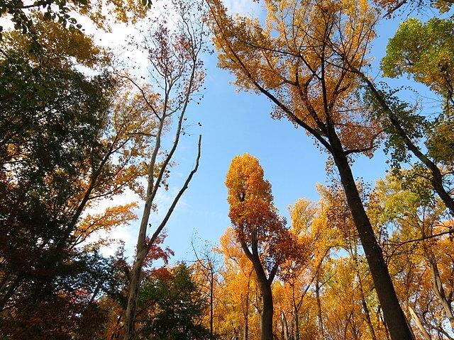 640px-Fall_Colors_in_Rock_Creek_Park_-_Flickr_-_treegrow_(2).jpg