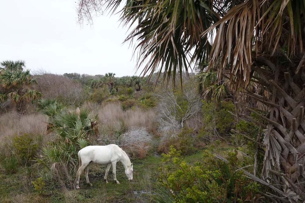 Cumberland Island, photo courtesy Joseph Bryan.