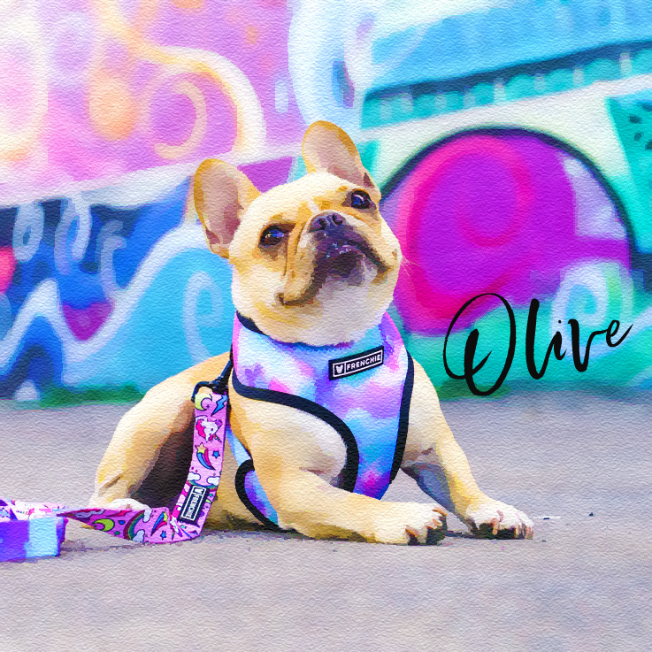 Frenchie Smooth Watercolor.jpg