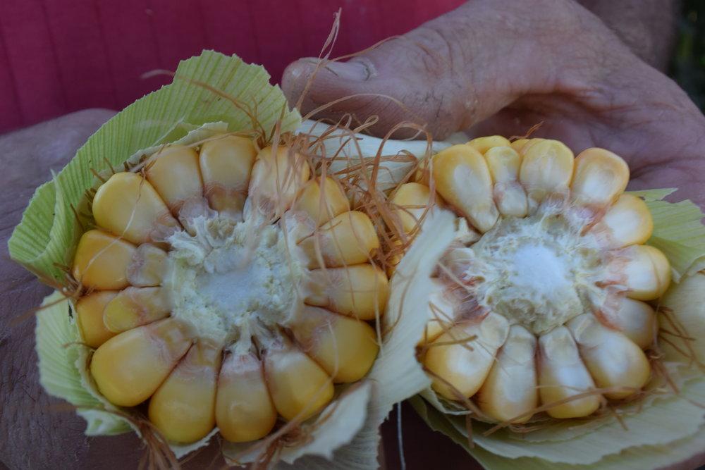 corn cob in half.jpg