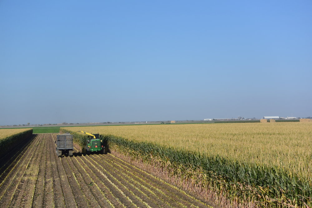 Producer trials in the western US showed good productivity and yields.  -