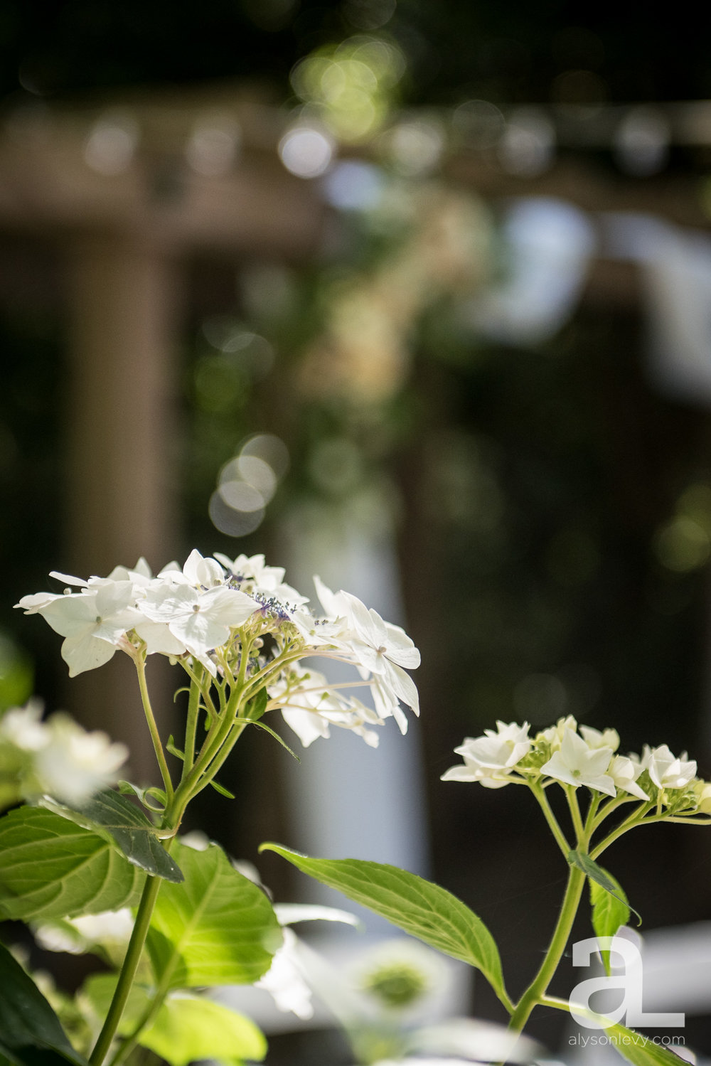 Leach-Botanical-Garden-Portland-Wedding-Photography-007.jpg