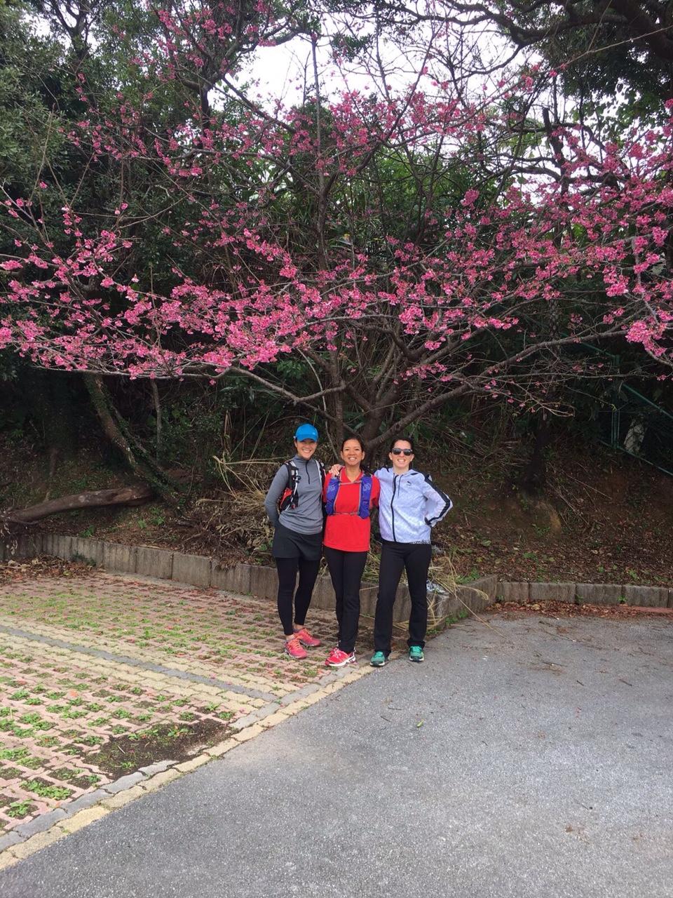 Greeted by a beautiful Sakura