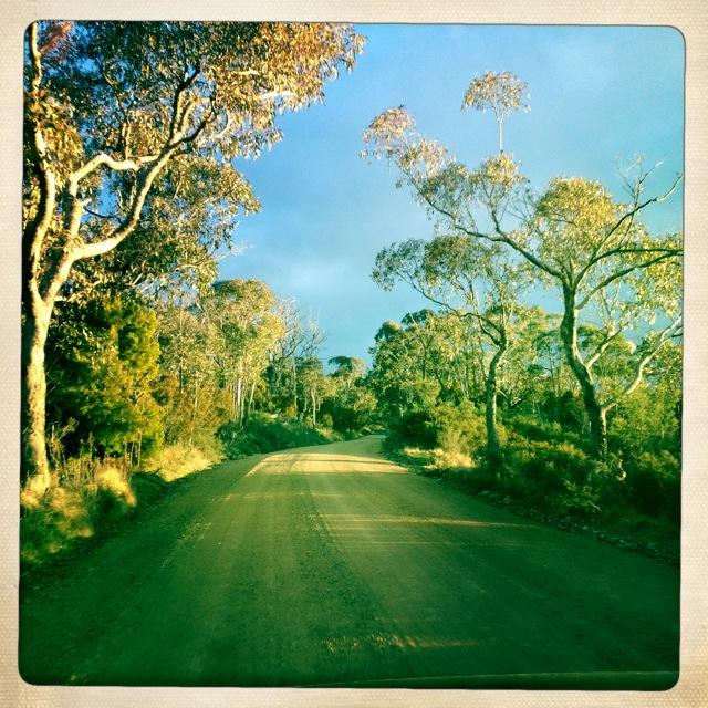 road trip mount conobolas.JPG