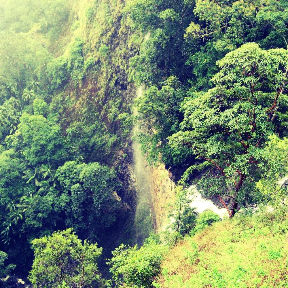 kondalilla falls flaxton.jpg
