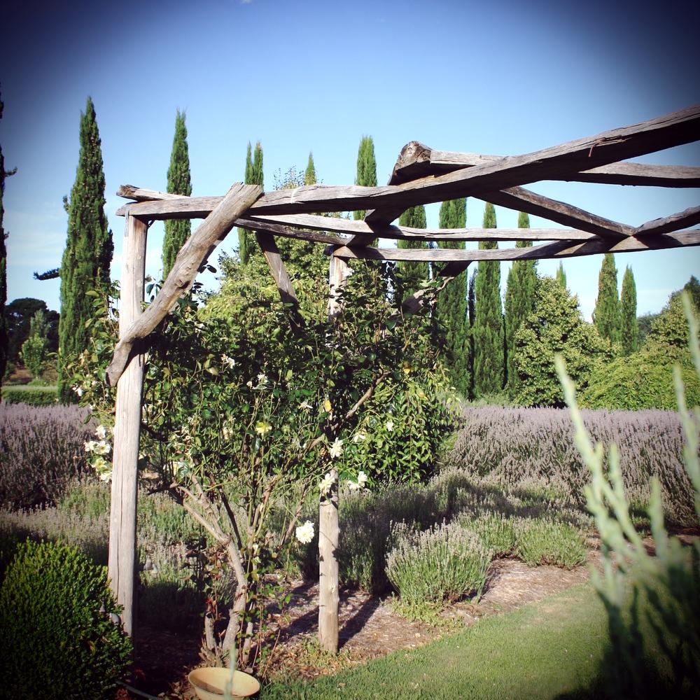 lavendula swiss italian farm.jpg