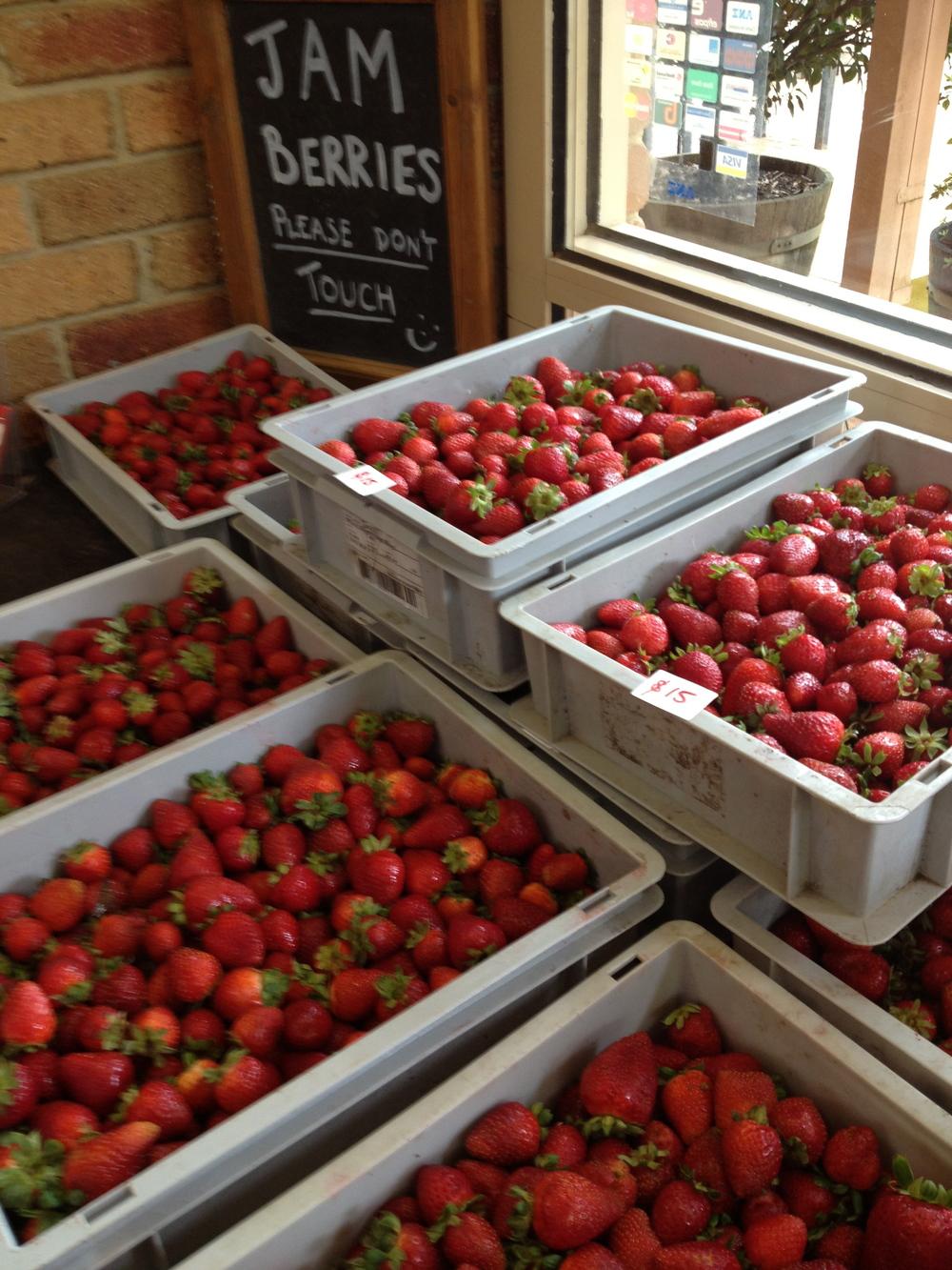 Sunny Ridge Strawberry Farm.jpg