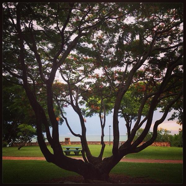darwin tree.JPG