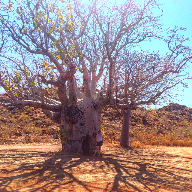 Giant Boab tree!