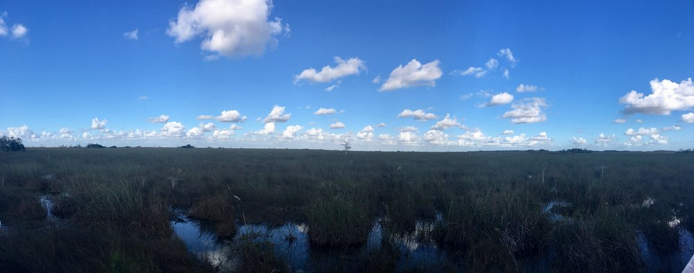 A panoramic view of the Everglades in Florida.