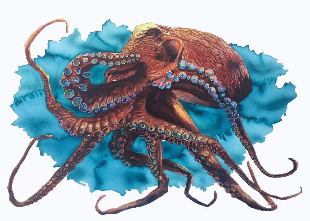 Kai_Kaulukukui_BlueOctopus.jpg