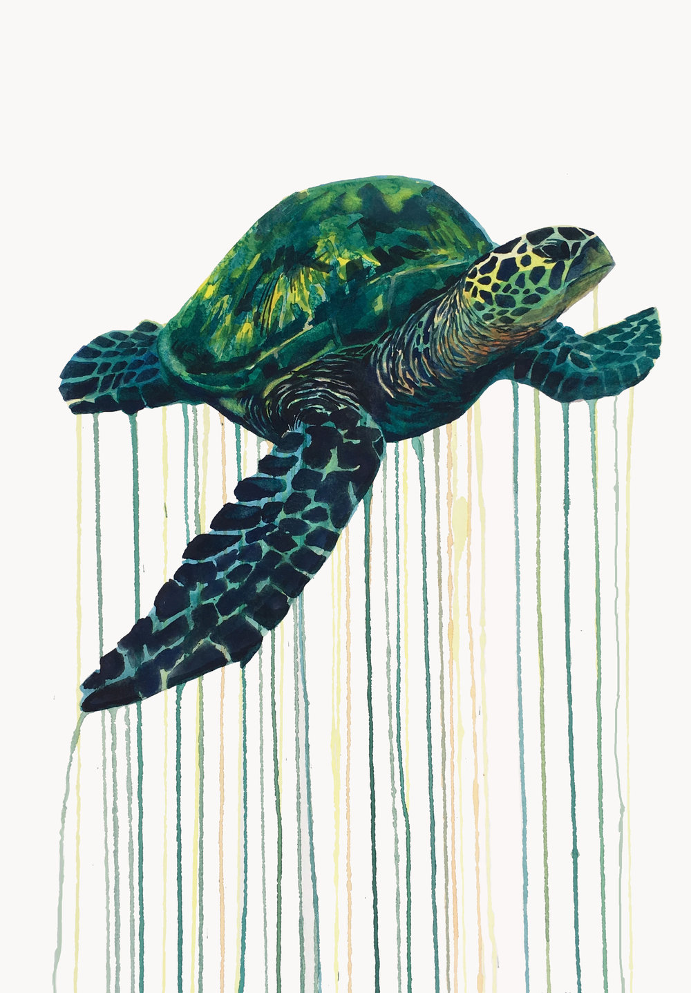 Kai_Kaulukukui_Turtle.jpg
