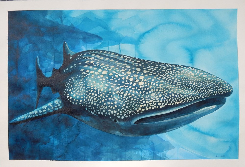 """""""Whale Shark""""  26x36 Watercolor $750"""