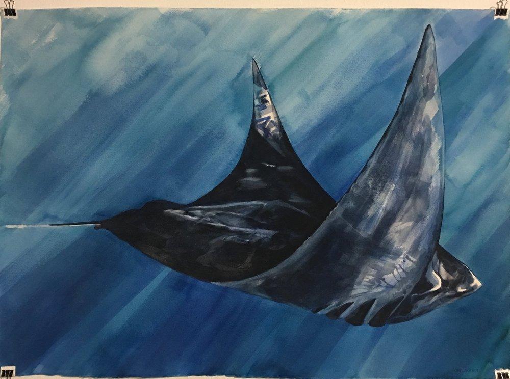 """""""Manta""""  26x36 Watercolor $450"""