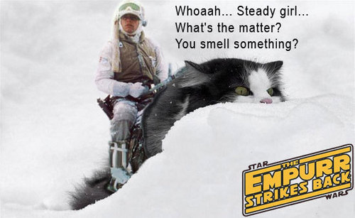 cat-luke-tauntaun-star-wars.jpg