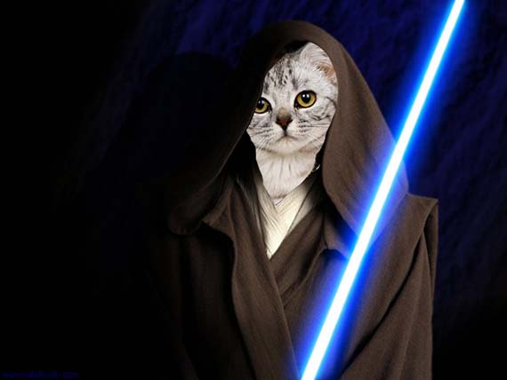 star-wars-cats-3.jpg